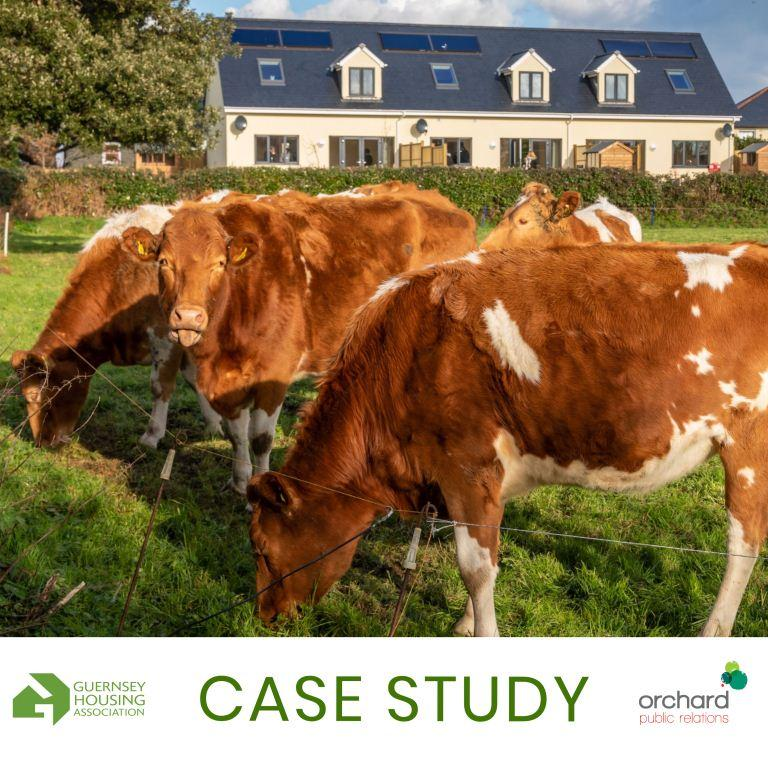 Case study – Building a new online home for the Guernsey Housing Association